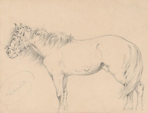 Friedrich Carl von Scheidlin – Štúdia koňa s dlhou hrivou I.