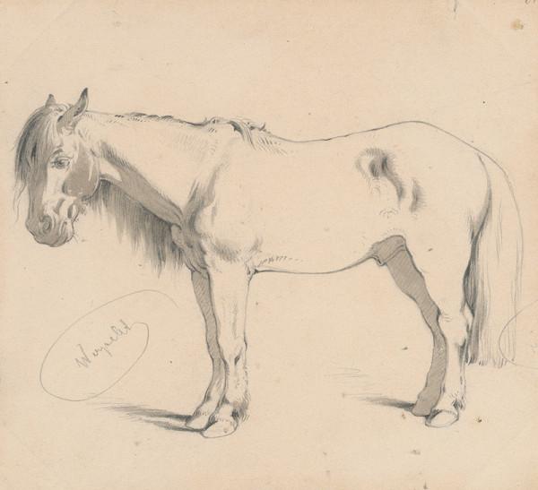 Friedrich Carl von Scheidlin – Štúdia koňa s dlhou hrivou II.