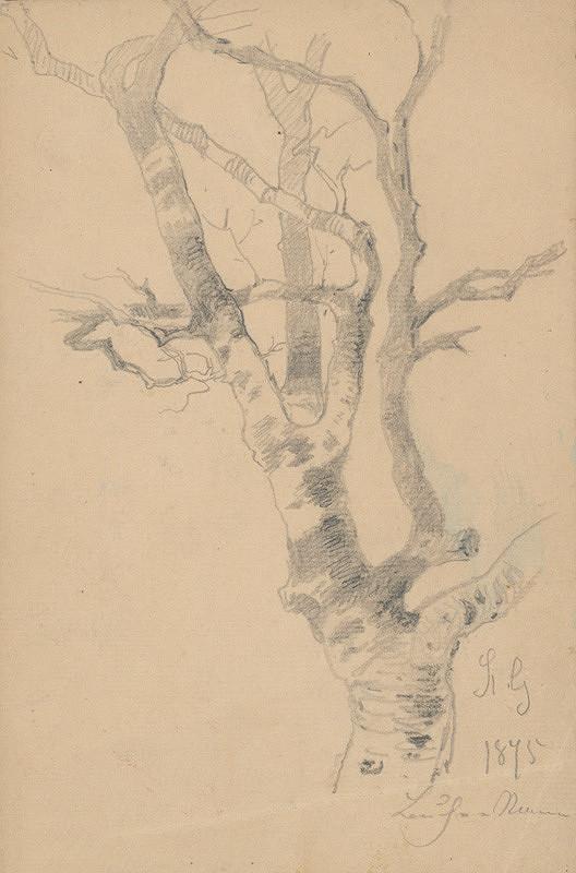 Friedrich Carl von Scheidlin – Štúdia stromu