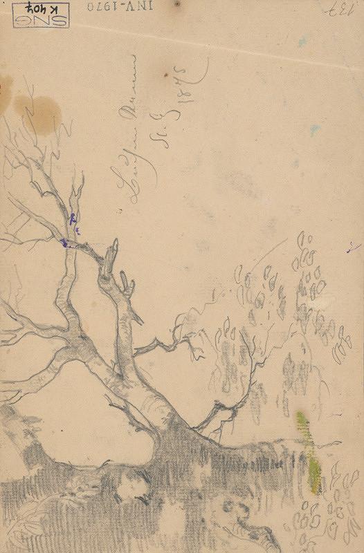 Friedrich Carl von Scheidlin - Štúdia stromu