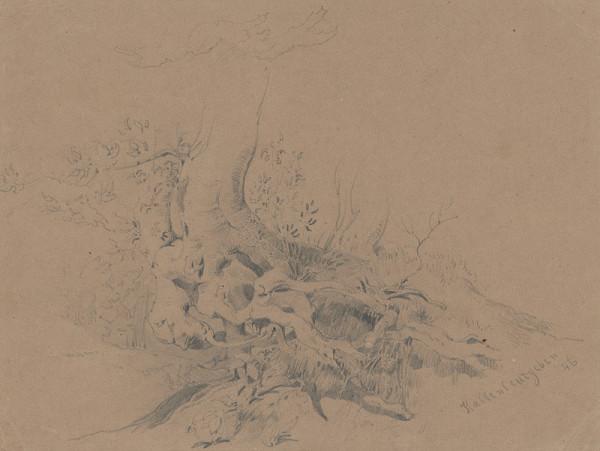 Friedrich Carl von Scheidlin – Štúdia koreňa starého stromu