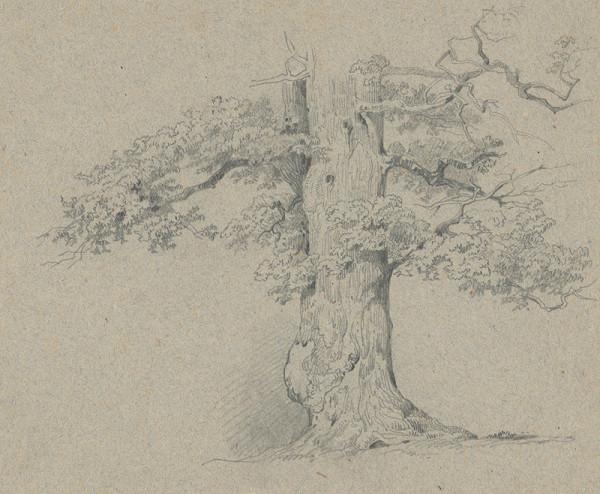 Friedrich Carl von Scheidlin – Štúdia starého listnatého stromu
