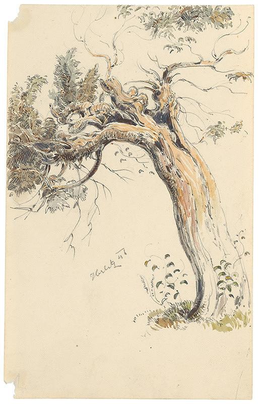 Friedrich Carl von Scheidlin – Štúdia starého kmeňa stromu