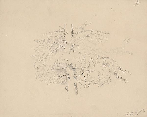 Henriette Jetti Wittmann - Štúdia ihličnatého stromu