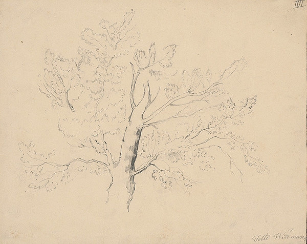 Henriette Jetti Wittmann - Štúdia listnatého stromu