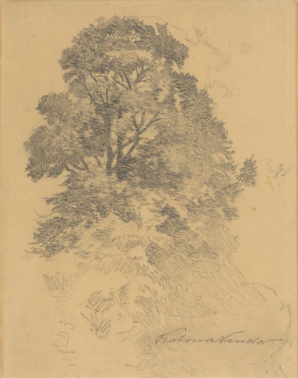 Ferdinand Katona - Štúdia stromu