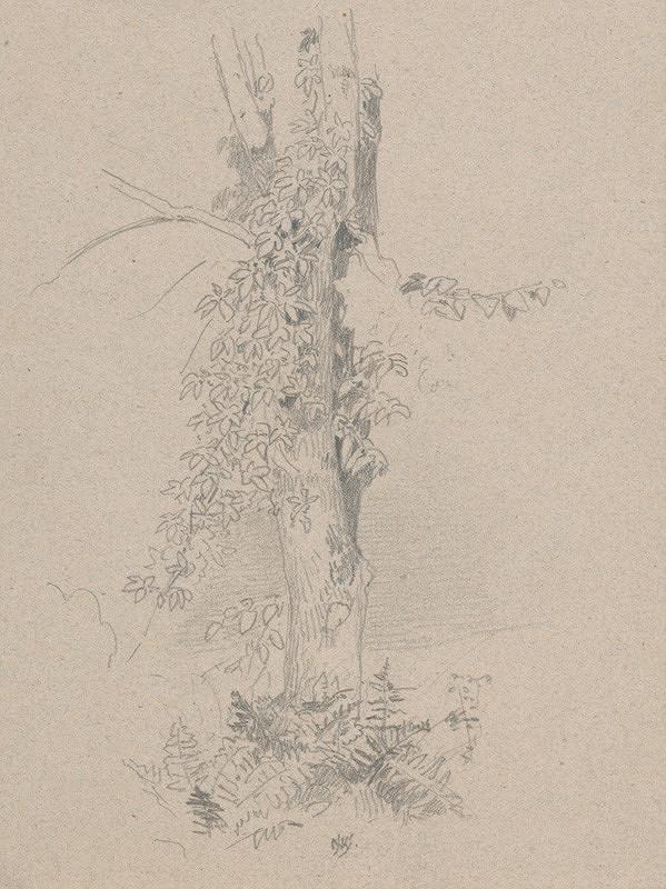 Jan Novopacký - Štúdia kmeňa stromu