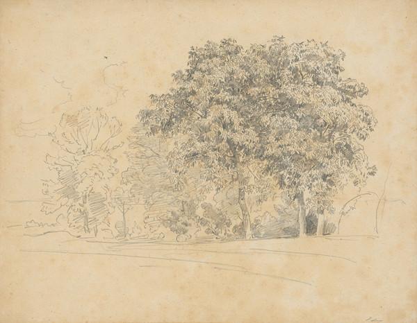 Jan Novopacký - Listnaté stromy
