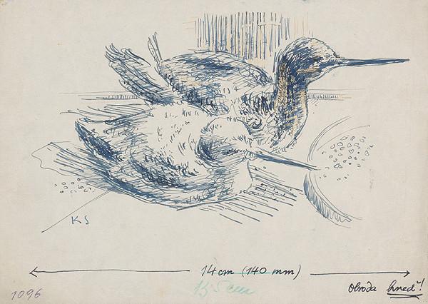 Koloman Sokol - Dvaja vtáci chichicuilotes