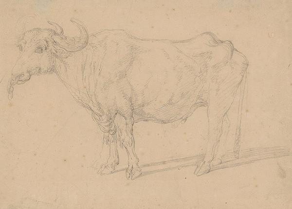 Francúzsky maliar z 18. storočia – Štúdia býka