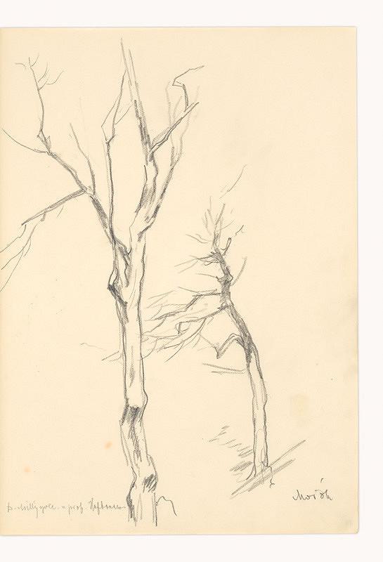 Dezider Milly - Kresba podľa Mařáka (Strom)