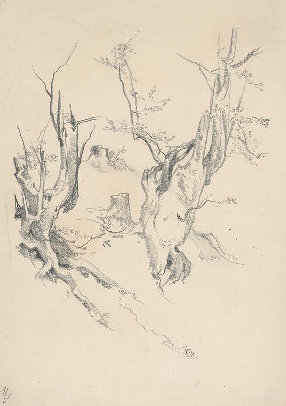 Jaroslav Vodrážka – Kresba kmeňov starých stromov