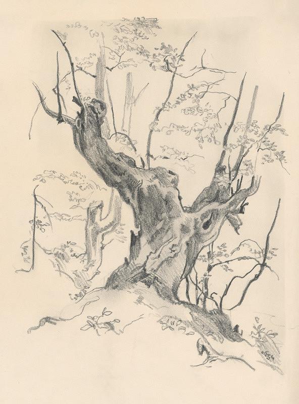 Jaroslav Vodrážka - Kresba starého kmeňa stromu