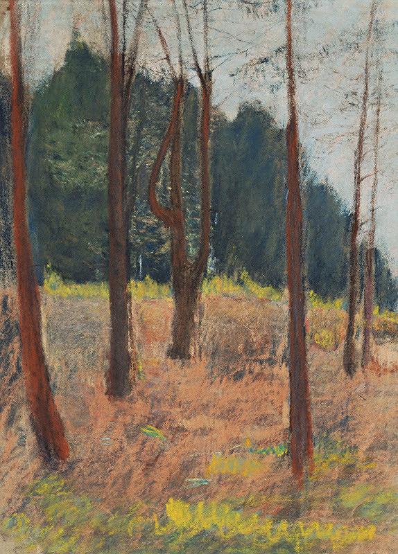 Margita Czobelová - Štúdia lesného porastu