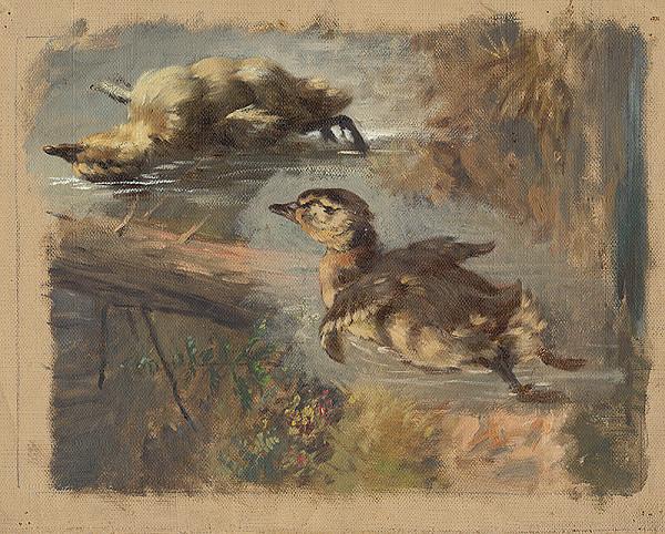 Friedrich Carl von Scheidlin – Štúdia kačíc na vode I.