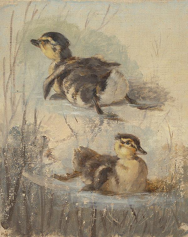 Friedrich Carl von Scheidlin – Štúdia kačíc na vode II.
