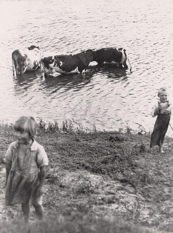Irena Blühová – Pastierik kráv