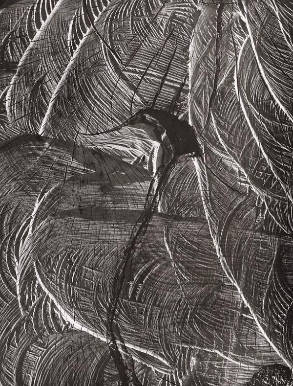 Martin Martinček – Nezbadaný svet IV. Palmové listy