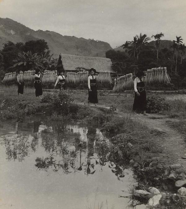 Ján Cifra - Vietnam. Zber úrody