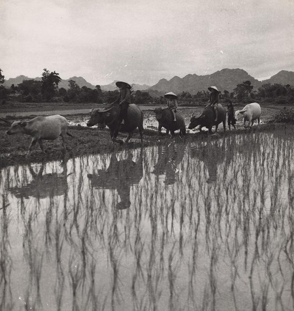 Ján Cifra - Vietnam. Z poľa
