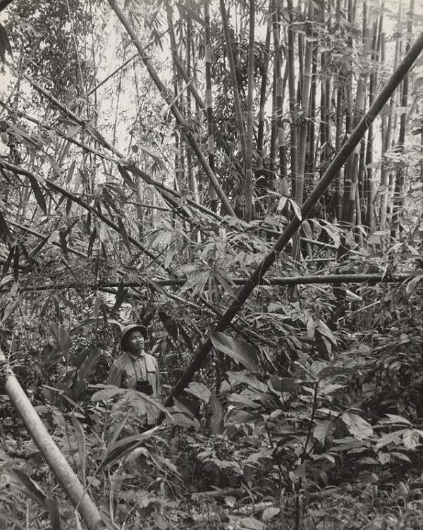 Ján Cifra – Vietnam. V pralese