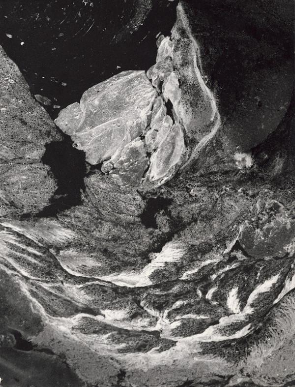 Martin Martinček – Fantázia prírody. Morský vták
