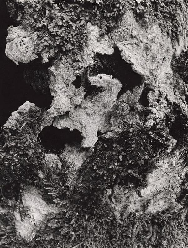 Martin Martinček – Fantázia prírody. Medveď v brlohu