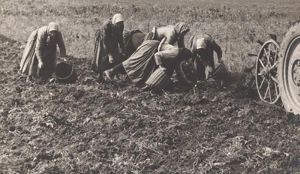 Martin Martinček - Zbieranie zemiakov I.