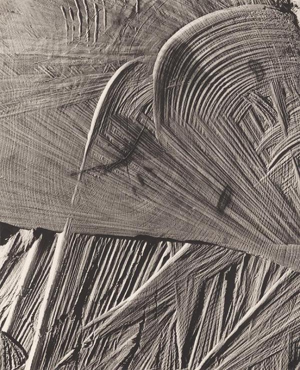 Martin Martinček - Palmové listy