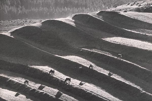 Martin Martinček – Na paši v horách