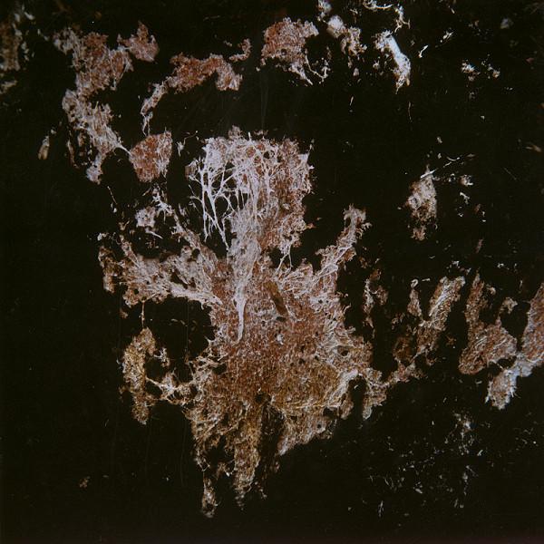 Martin Martinček - Umenie umierajúcich stromov I.