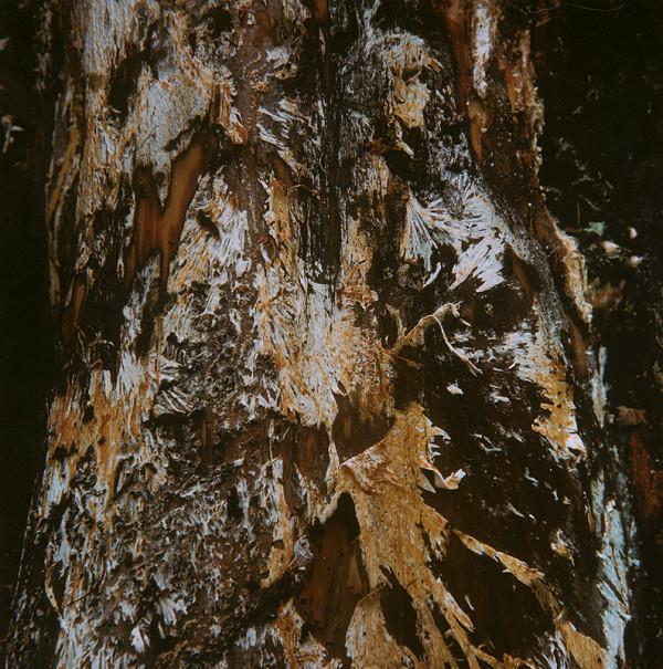 Martin Martinček - Umenie umierajúcich stromov II.