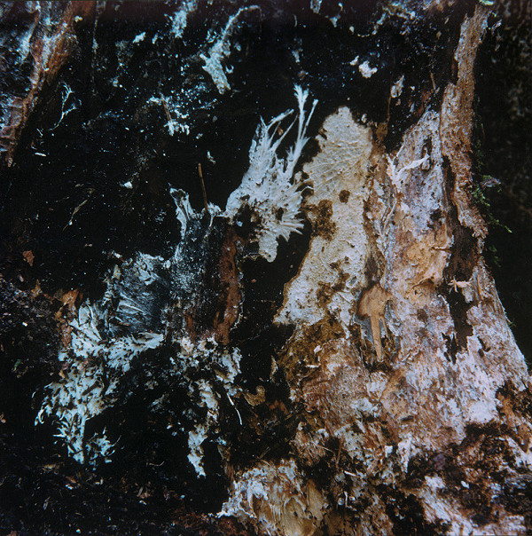 Martin Martinček - Umenie umierajúcich stromov V.
