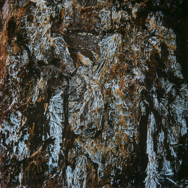 Martin Martinček – Umenie umierajúcich stromov VII.