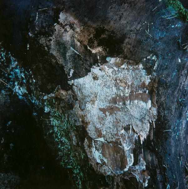 Martin Martinček – Umenie umierajúcich stromov VIII.