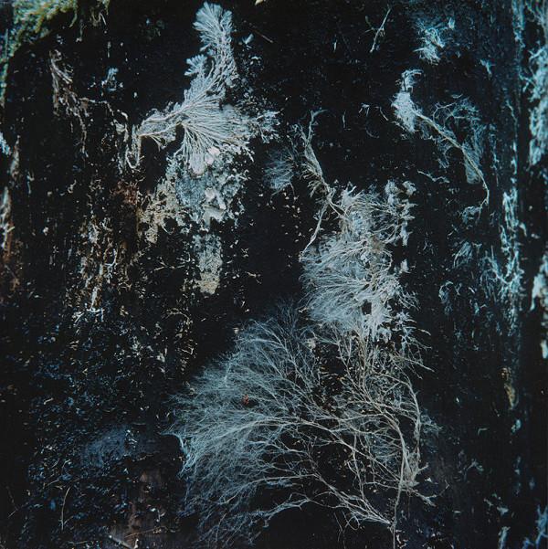 Martin Martinček – Tajomstvo hory I. Modré zátišie