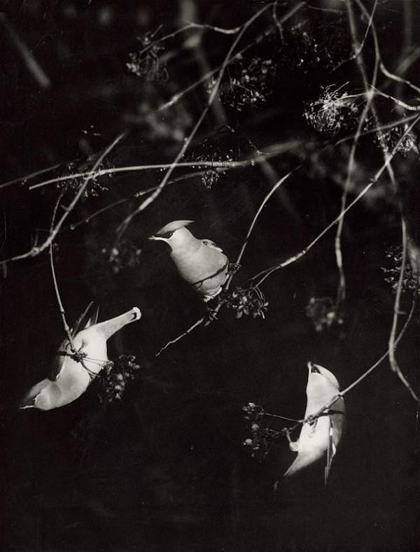 Martin Martinček – Vtáci I.