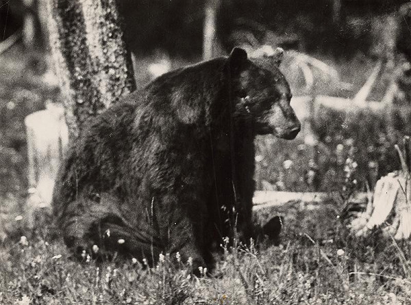 Martin Martinček – Medveď
