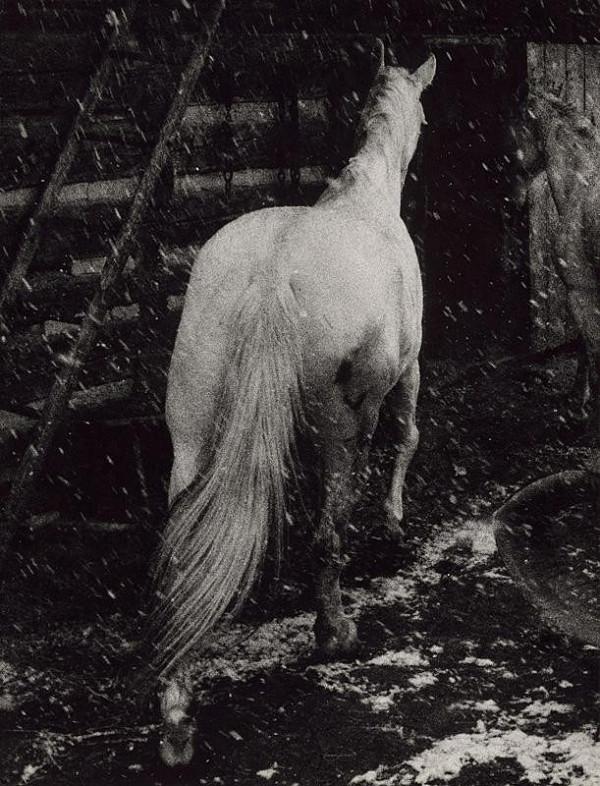 Martin Martinček – Biely kôň