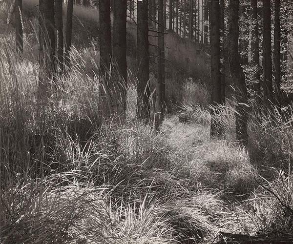 Martin Martinček – Vnútro lesa