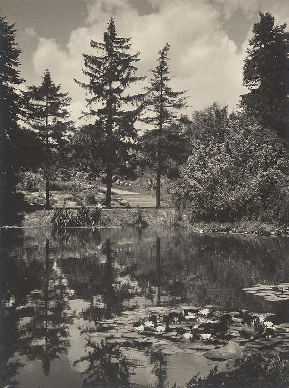 Ivan Kozáček – Leknínové jazierko v Bratislave (Botanická záhrada)