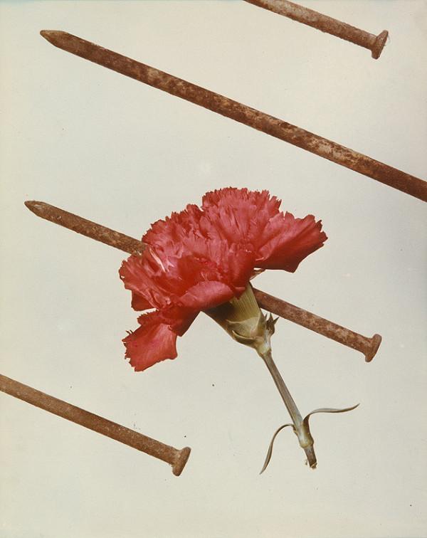 Jean Michel Kollar - Prebodnutý kvet