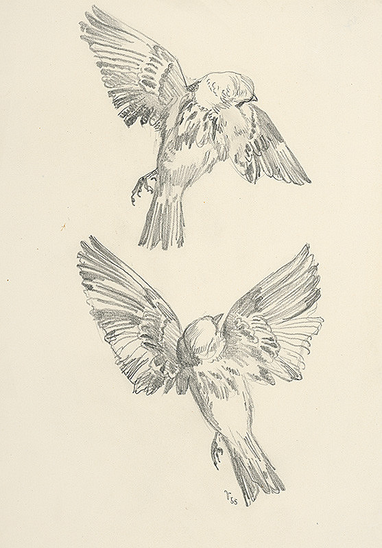 Jaroslav Vodrážka – Dva dravé vtáky