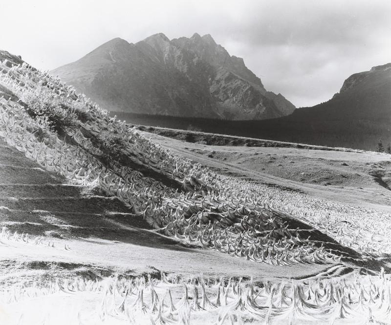 Karel Plicka – Sušenie ľanu, Štôla, Vysoké Tatry, 1947, Tatranská galéria
