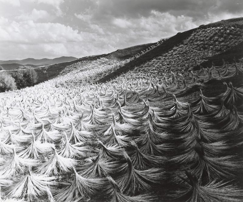Karel Plicka – Vysoké Tatry, Sušenie ľanu, Štôla, 1949, Tatranská galéria