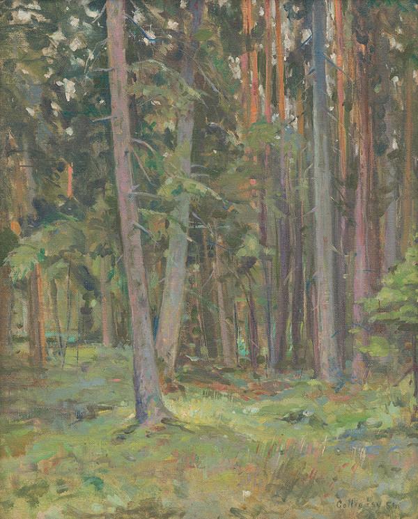 Juraj Collinásy - Štúdia lesa