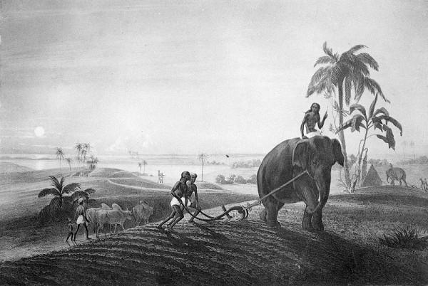 Emanuel Andrássy – Orba slonom (Motív z cesty po východnej Indii III.)