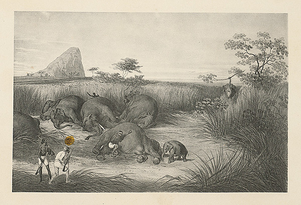 Emanuel Andrássy – Osem slonov nahromadených na kope a chytené sloníča. Logalla (Motív z cesty po východnej Indii X.)