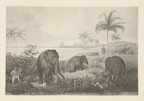 Emanuel Andrássy – Lov na slony so zakrádajúcimi sa lovcami (Motív z cesty po východnej Indii XIII.)