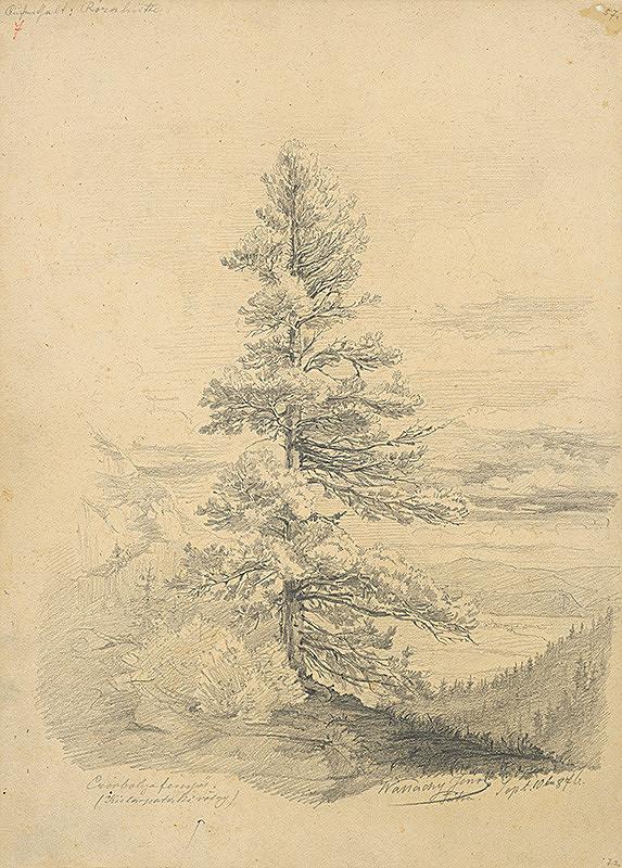 Eugen Wallachy – Štúdia borovice